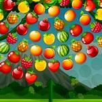 الفواكه المتشابهة